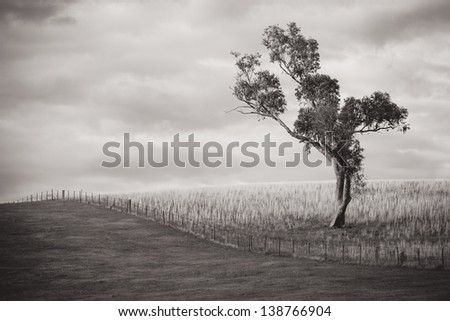 A tree stands by itself on a stormy day near Gundagai, New South Wales, Australia