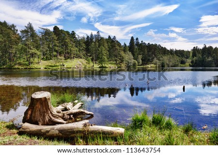 A tree stump on the shore of Tarn Hows, a small lake in the English Lake District - stock photo