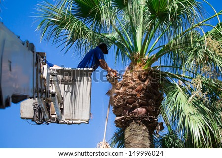 A tree surgeon cuts and trims a tree  - stock photo