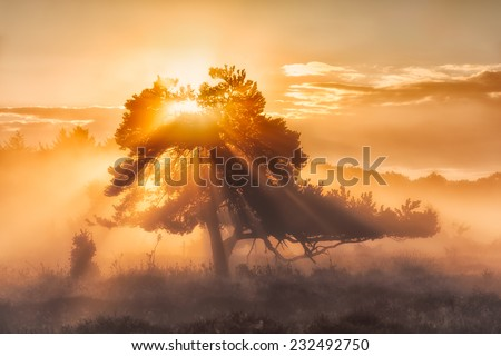 A tree with rays of sunlight shining trough on a beautiful autumn morning at sunrise in The Netherlands with a warm golden glow - stock photo