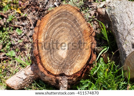 A tree wood rings texture