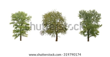 a trees isolated on white - stock photo