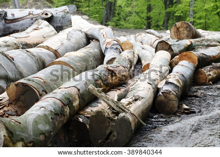 a trees   logging , felling of trees  , the lumber industry - stock photo