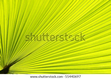 a tropical palm tree - stock photo