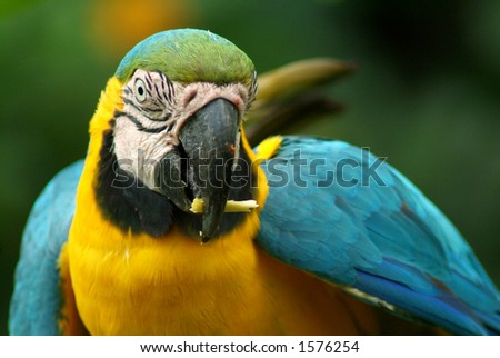 A tropical parrot from the Amazon - stock photo