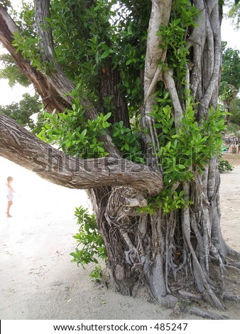 a tropical tree