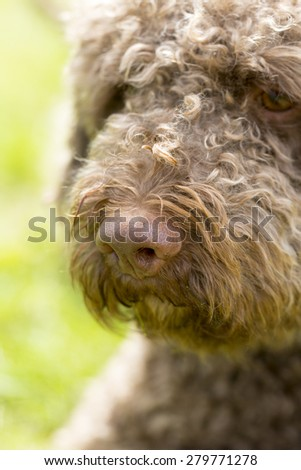A truffle dog's nose. - stock photo