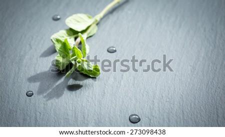 A twig of fresh oregano on a dark stone background. Shallow DOF - stock photo