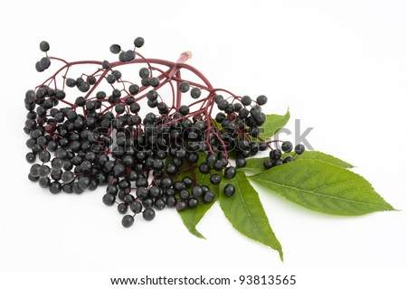 A twig with elderberries and a leaf lying on a white background. - stock photo