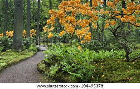 a typical, Colorful  japanese garden in spring - stock photo