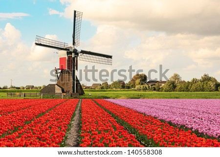 A typical Dutch composition of a mill with flowering Tulip fields in the foreground against a Dutch cloudy sky - stock photo