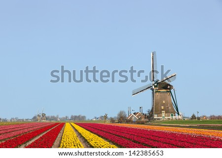 A typical Dutch composition of a windmill at the right with red and yellow flowering Tulip fields in the foreground against a clear blue sky