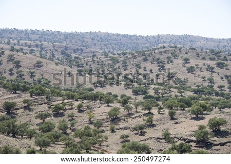 A valley with a big argan tree plantation in the Atlas mountains of Morocco