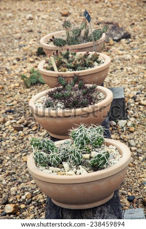 A variety of cactus plants in the garden. - stock photo