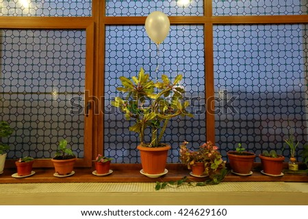 A variety of decorative green potted flowers and a balloon