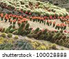 a variety of flowering cacti in open space - stock photo