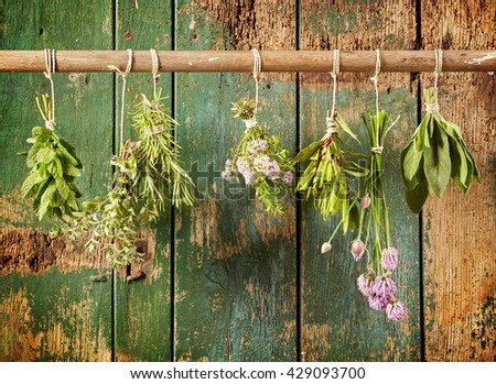 A variety of freshly picked culinary herbs hanging in bunches on a rustic wood background including chives, tarragon, mint, oregano, thyme, rosemary and sage - stock photo