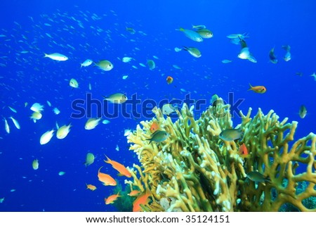 A variety of hard and soft coral and tropical fish