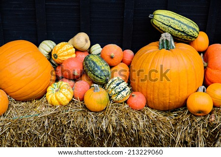 A variety of pumpkins, gourds, and squash displayed outside on hay stacks during the autumn season.  - stock photo