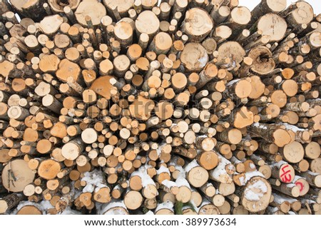 A variety of trees, birch and pine, felled and stacked in a timber yard in Finland in winter.