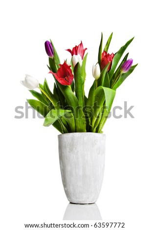 a Vase with red, pink and white tulips on a pure white background with space for text