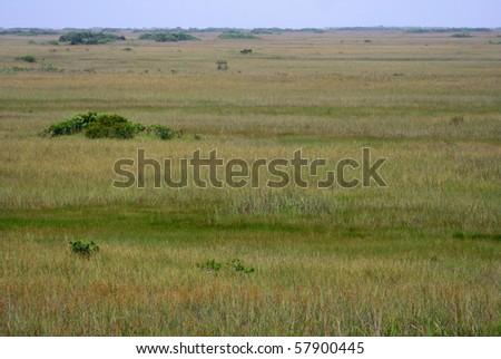 A vast sawgrass prairie in Everglades National Park - stock photo