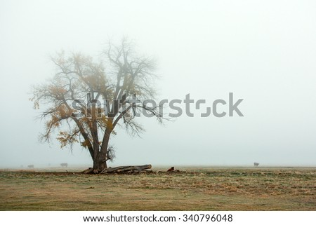 A veil of fog covers a rural farm pasture adorned with a beautiful old tree on a autumn morning. - stock photo