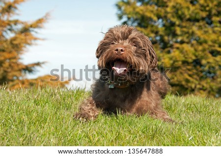 A very happy Patterdale Terrier - stock photo