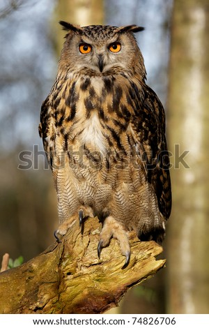 A very large eagle owl - stock photo