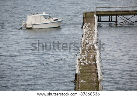 A very large flock of Seagulls on a jetty