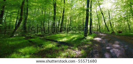 A very sharp and detailed photo of the famous saturated Danish forest in springtime - stock photo