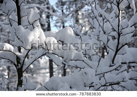 stock-photo-a-very-unusual-snow-fall-in-
