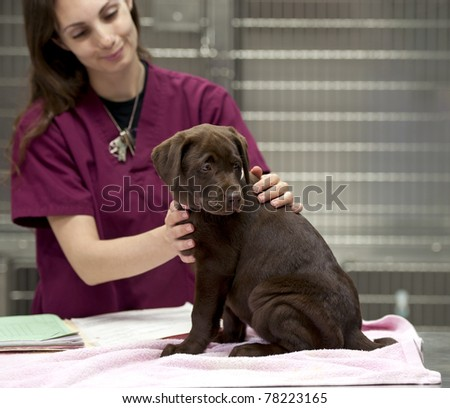 a vet technician gets a patient ready for her shots - stock photo