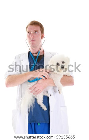 a veterinarian gives Fifi the Bichon Frise a check up, isolated on white - stock photo