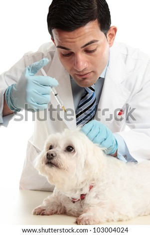 A veterinarian giving an injection into the scruff of a dog's neck. - stock photo