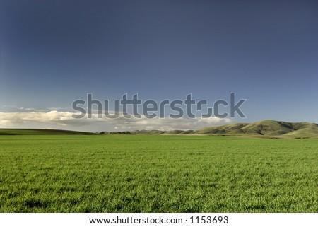 A vibrant field of green grass under a deep blue sky. - stock photo