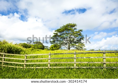 A vibrant, green meadow behind a ranching fence shows the lush growth in a rural farming community on Kauai Hawaii.  - stock photo