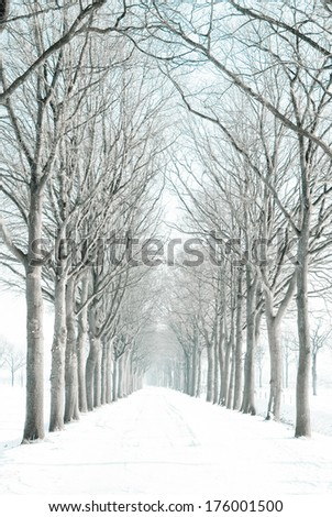 A view along an avenue of deciduous trees in winter, with the trees and path dusted in fresh snow. - stock photo