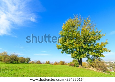 A view of a colorful tree in a park during autumn, Cracow, Poland - stock photo