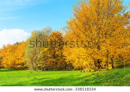 A view of a colorful tree in a park during autumn, Cracow, Poland
