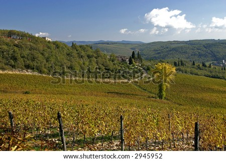 A view of a large Tuscan Vineyard. Chianti, Tuscany, Italy.