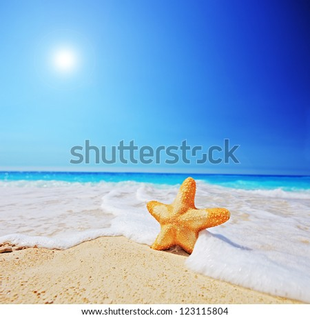 A view of a starfish on a beach with clear sky and wave, shot with a tilt and shift lens