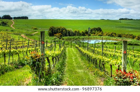 a view of an Australian vineyard on a sunny day - stock photo