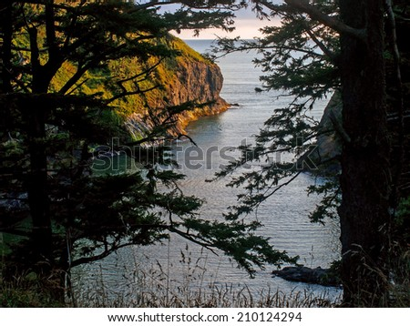 A View of an Ocean Cliff Framed by Evergreen Trees on the Washington Coast USA - stock photo