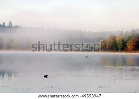 A view of fog in deer lake in burnaby. - stock photo