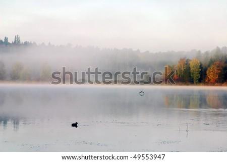 A view of fog in deer lake in burnaby. - stock photo