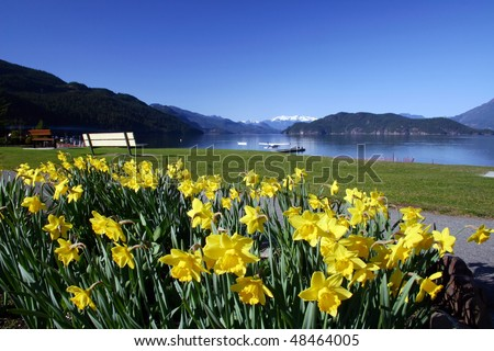 A view of Harrison with yellow flowers in spring season near Vancouver,Canada. - stock photo