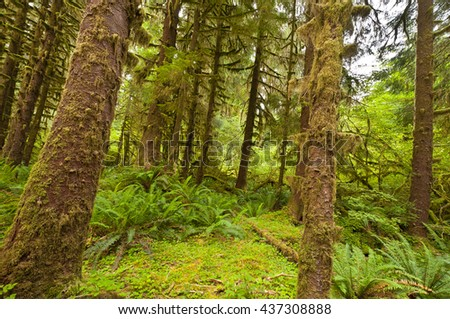A view of Hoh Rain forest at Olympic National Park