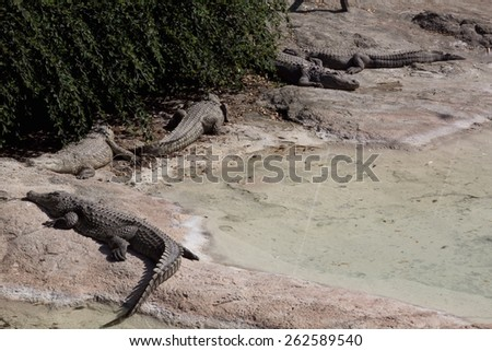 a view of some crocodile - stock photo