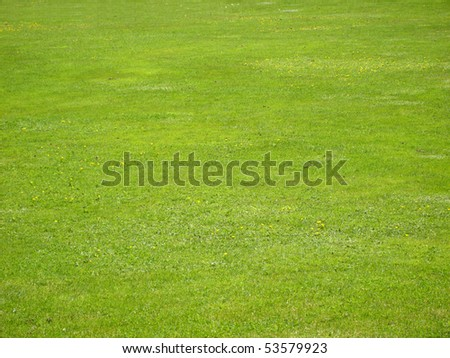 A view of spring grass field. - stock photo